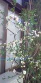 2012-木瓜の花