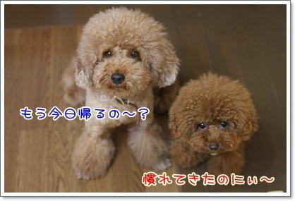 10_20090817012956.jpg