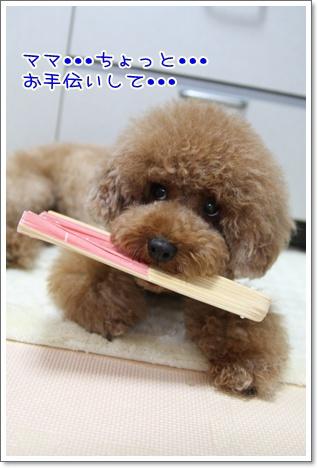 11_20090810224024.jpg