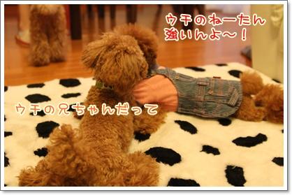 11_20091102003620.jpg
