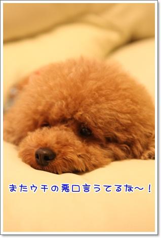 12_20091102003620.jpg