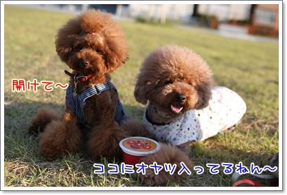 15_20091011113846.jpg