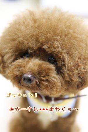 16_20090819182556.jpg