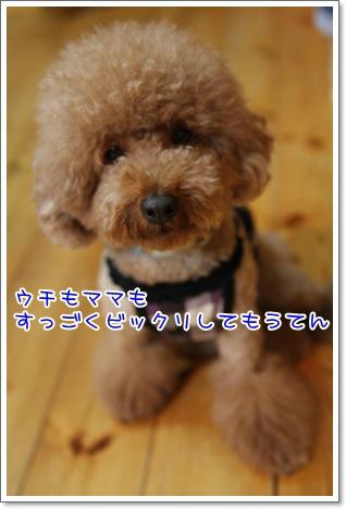 16_20090914014512.jpg