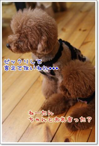 17_20090914014512.jpg