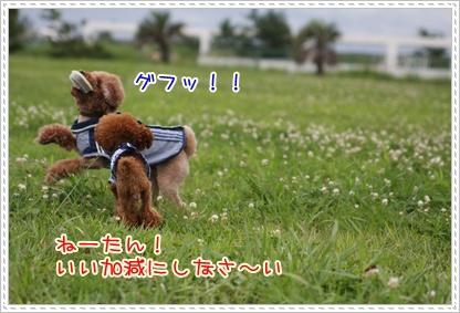 18_20090727203222.jpg
