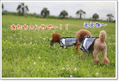 19_20090726231627.jpg