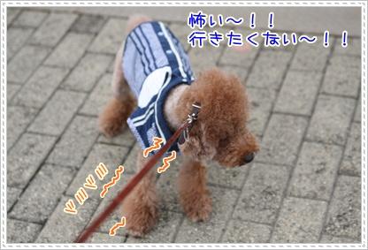 22_20090727204005.jpg