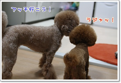 2_20090805221555.jpg