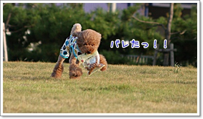 31_20090831003142.jpg
