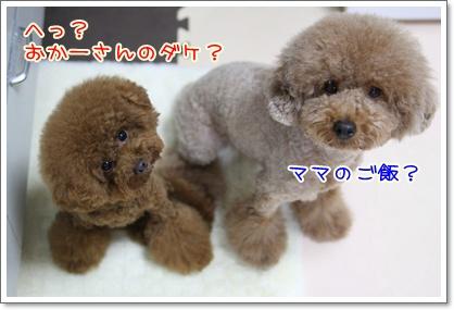 3_20090729175353.jpg