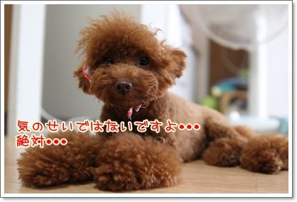 3_20090904210034.jpg