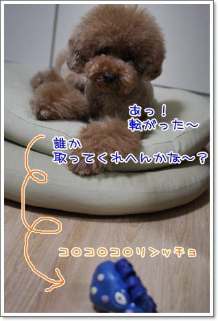 3_20090910184448.jpg