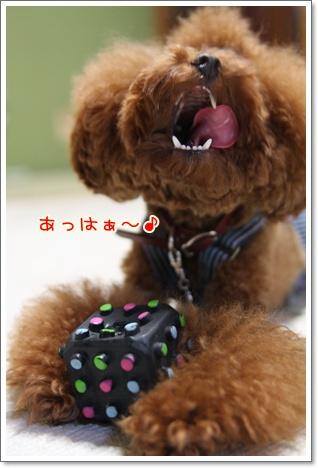3_20091010235703.jpg