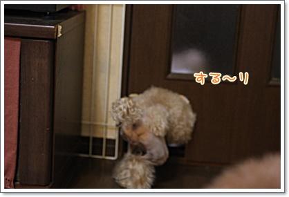 4_20090817011926.jpg