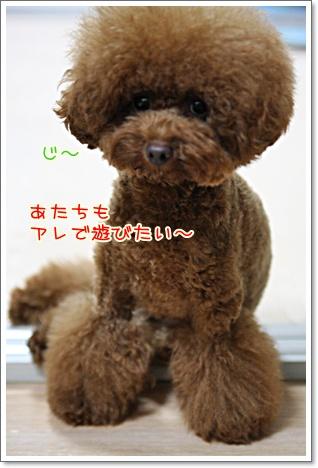 4_20090910184448.jpg