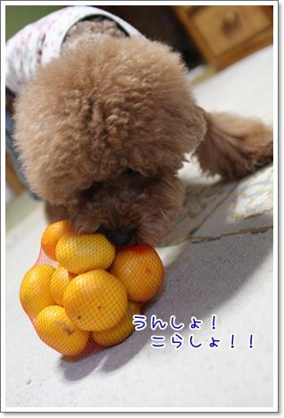 4_20091010235703.jpg