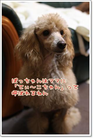 4_20091026230246.jpg