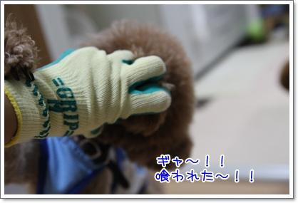5_20090725005643.jpg