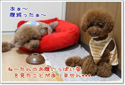 5_20090801005453.jpg