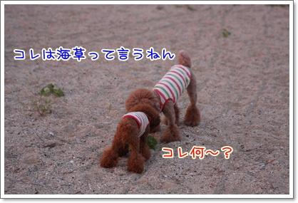 5_20090809004712.jpg