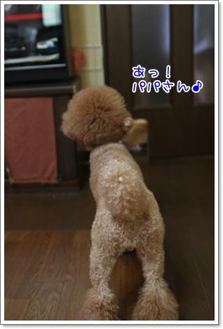 5_20090817011926.jpg