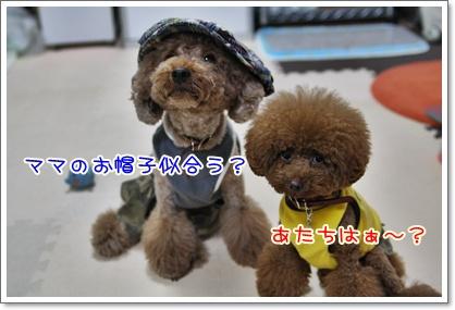 5_20090823220852.jpg