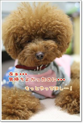 5_20090926002621.jpg