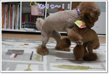 5_20091002002551.jpg