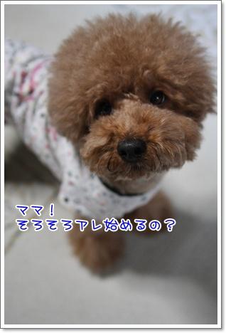 5_20091010235703.jpg