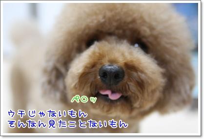 6_20090809214322.jpg