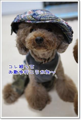 6_20090823222800.jpg