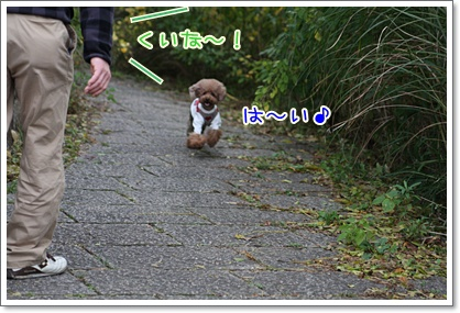 6_20091103233446.jpg
