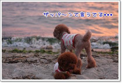 7_20090809005334.jpg