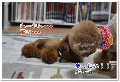 7_20091002003107.jpg