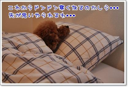 7_20091015224034.jpg