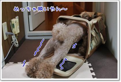 7_20091027184736.jpg