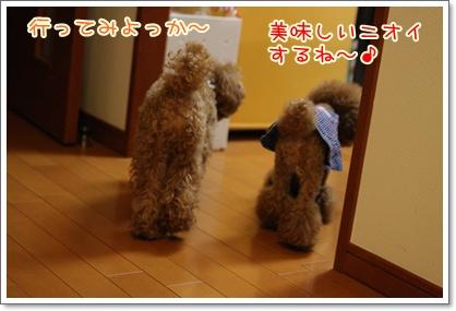 7_20091102003621.jpg