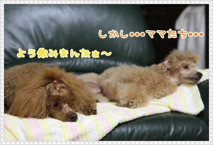 8_20090816231246.jpg
