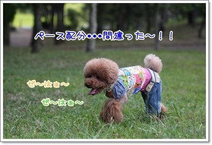 8_20090923231745.jpg