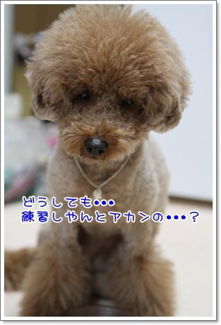 8_20091027184736.jpg