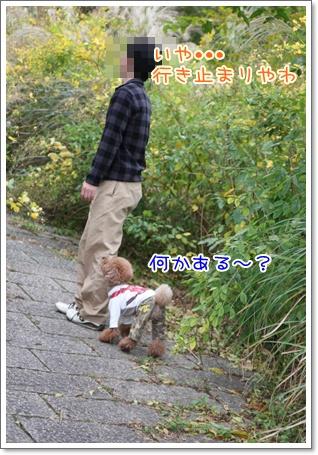 8_20091103235231.jpg