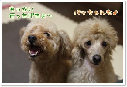 9_20090803005305.jpg