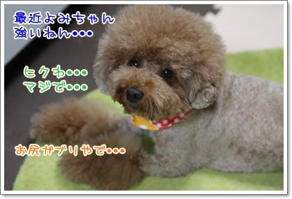 9_20091002003107.jpg