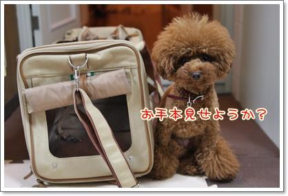 9_20091027184736.jpg