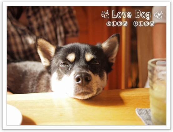 1106lovedog06