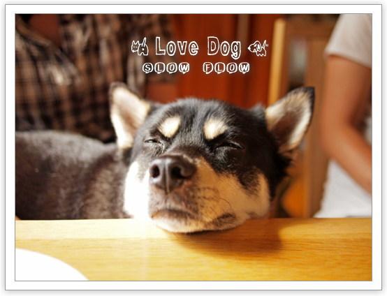 1106lovedog08