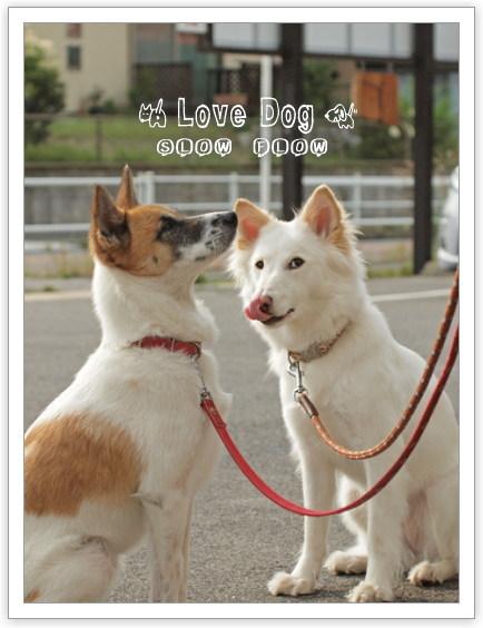 1106lovedog11