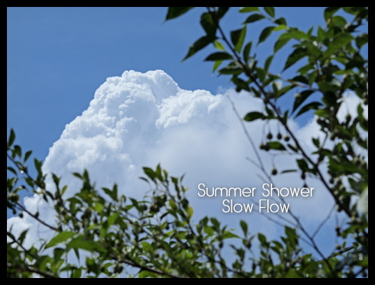 1108summershower03