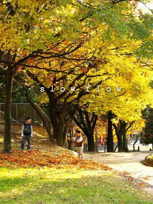 公園紅葉08